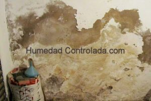 humedad en paredes, moho en casa