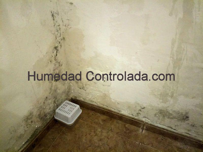 acaba con el moho y el olor a humedad en tu casa